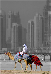 (Miss Art) Tags: old city blue red bw white contrast dubai desert uae camel present past combination superaplus aplusphoto