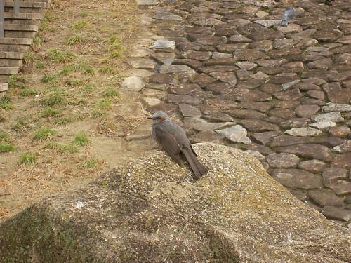 この鳥、なんていう名の鳥かしら…