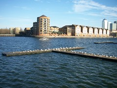 Black-Headed Gulls (no zoom) on Greenland Dock