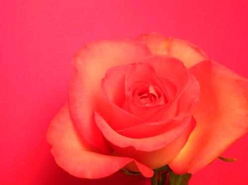 get well flower portrait