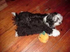 Pinhead Pup