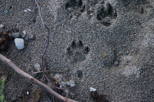 paw prints at owens beach