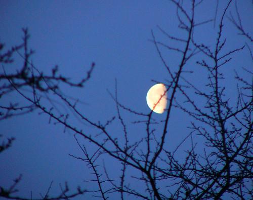 Pro moon