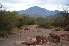 Riverbed (Hendrixson) Tags: arizona tucson saguaronationalpark