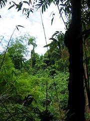 Впечатляющие джунгли.
