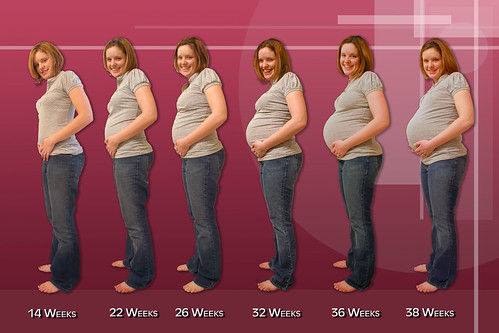 Pregnancy Progression by abardwell