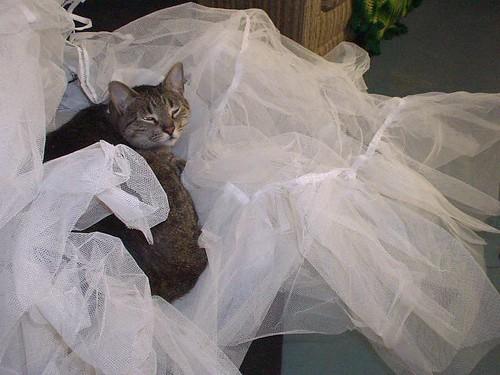 sweetness and petticoat