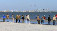 Sanibel Bird Photographers