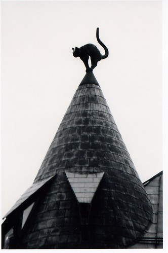 Black cat on the roof in Riga