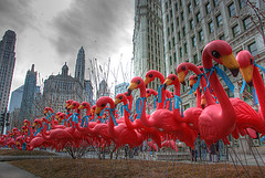 Pink Flamingos invade Chicago, Feb 28, 2007 (spudart) Tags: city pink urban chicago color bird promotion advertising flamingoes outdoors photo illinois downtown day gbrearview outdoor flamingo plastic photograph daytime publicart michiganavenue lawnornament pinkflamingoes airtran