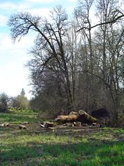 park oregon creek fallen ash dairy hillsboro