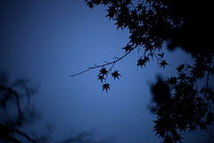 東京の秋 2016年 06 (sunuq) Tags: ペッツバール ロモグラフィ lomography zenit petzval japan 日本 canon eos 5dsr bokeh ボケ tokyo 東京 小石川後楽園 文京区 紅葉 plant tree foliage