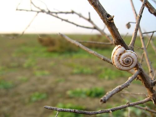 Seashells 100kms from the Caspian? How does that work? Near Navahi, Azerbaijan / どうして貝殻がここに?海から100km離れているのですが(アゼルバイジャン、ナヴァヒの近く)