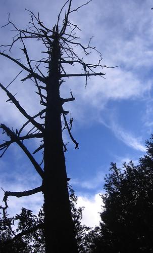 Nice dead tree