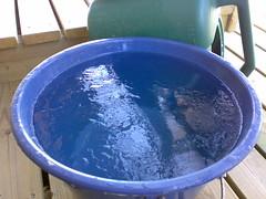 251220061165 (Nystin) Tags: water suomi finland vesi j mpri n73 kastelukannu hirvensalmi leiniemi