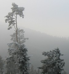 Fog and frost in the Black Forest