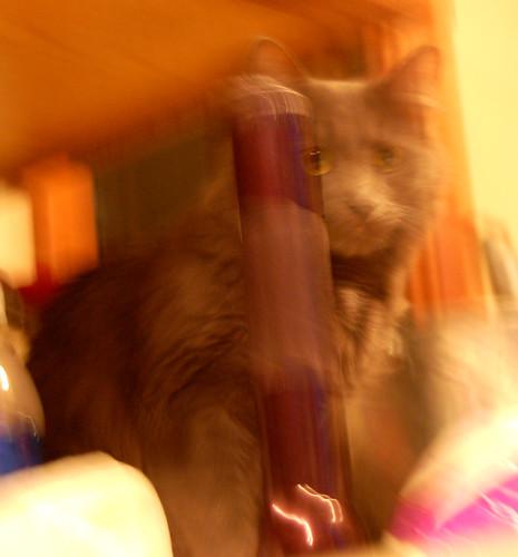Eleven blur 2