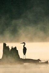 Noganosh Sunrise With Heron (James Patterson) Tags: canada bird heron nature animal animals silhouette fauna sunrise canon interesting wildlife canadian mostinteresting 100club canadiana birdwatcher jamespatterson sunrisesandsunsets 50club 50clubxcalidad mostinterestingset cans2s flkwrk naturessilhouettes