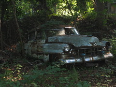 car wreck in the woods (MasterGeorge) Tags: trees urban abandoned car forest woods rusty wreck exploration