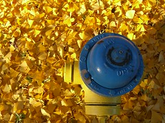 Hydrant (snaphappy4) Tags: blue fall water leaves yellow fire october tennessee foliage firehydrant 06 gingko topview