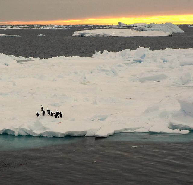 Penguins on Ice Flow, 0300 Wedell Sea