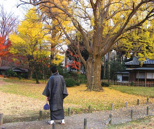 come d'autunno sugli alberi le foglie