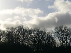 trees_stoneleigh