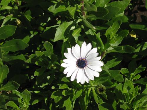 Flor branca no inverno