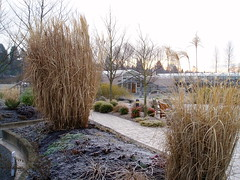 Soest Garden Cold