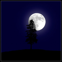 full moon with tree (sharply_done) Tags: blue moon tree silhouette square bravo fullmoon sharplydone