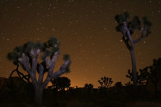 Joshua Tree Astrophotography