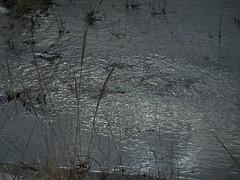 2007_02_25_056 (niedziela25luty) Tags: 2007 luty wiadukt srem rem 25luty