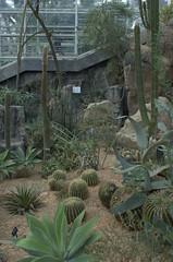 Desert Pavilion, Steinhardt Conservatory, BBG