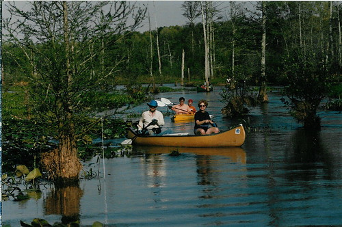 memphis trails wetlands canoeing greenway midsouth wolfriver