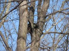 O'Bannon nest