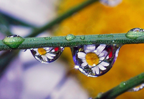 sparklin' drops of spring by Steve took it, on Flickr