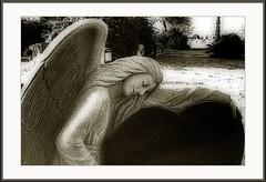 Sleeping Angel (fotolilith) Tags: sleeping blackandwhite film cemetery graveyard sepia angel rangefinder dreams gravestone canonet orton