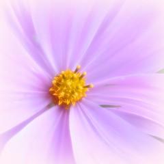 flower centre - by EssjayNZ