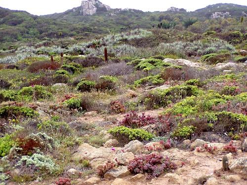 Los Molles. Sitio prioritario de conservación de la biodiversidad.