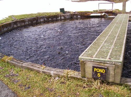Pond No 5