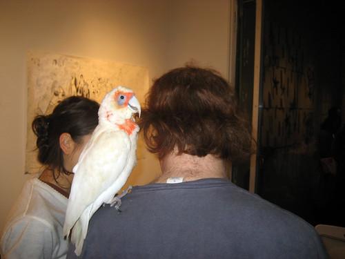 parrot_2816
