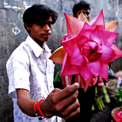 Petals, Toil and Business at Dadars Phulgalli [PHOTO 4] - The Lotus (lecercle) Tags: people india colour story smell bombay mumbai flowermarket dadar hindustantimes