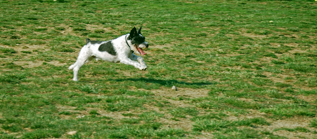 Hurley runs for the ball