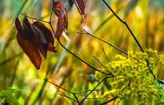 Ground level, at sunrise.... (tomk630) Tags: virginia nature light colors low sunrise usa autumn plants