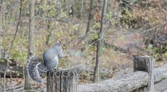 _DSC4370 (purin_cess) Tags: centralpark 2016 autumn 11月 十一月 秋 中央公園 紐約 ny newyork