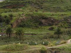 Barranco del Acebuchal senderismo isla de Gran Canaria 158 (Rafael Gomez - http://micamara.es) Tags: gran canaria acebuchal canary kanarische canaries islas islands insen iles canarias españa spain spanien espagne senderismo barranco del isla de
