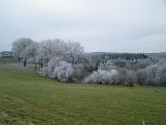 Hoarfrost Forest (erix!) Tags: winter forest hoarfrost eifel ef rauhreif wwwflickrcomgroupsflikrstockphotos hoarfrostrauhreif