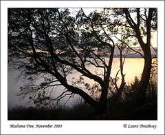 Sunset with Madrona Tree (oranmor) Tags: trees nature water sunsets bestnaturetnc06