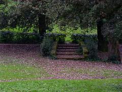 verde incantato (Fr@) Tags: roma verde scala capodanno 2007 villada