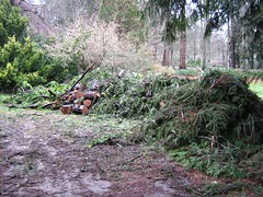 "stanley park mess • <a style=""font-size:0.8em;"" href=""http://www.flickr.com/photos/70272381@N00/343521360/"" target=""_blank"">View on Flickr</a>"